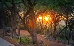 1433-path-sunrise-copy